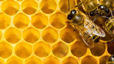 """Nachlese """"Weiterbildung Bienensachverständige"""""""