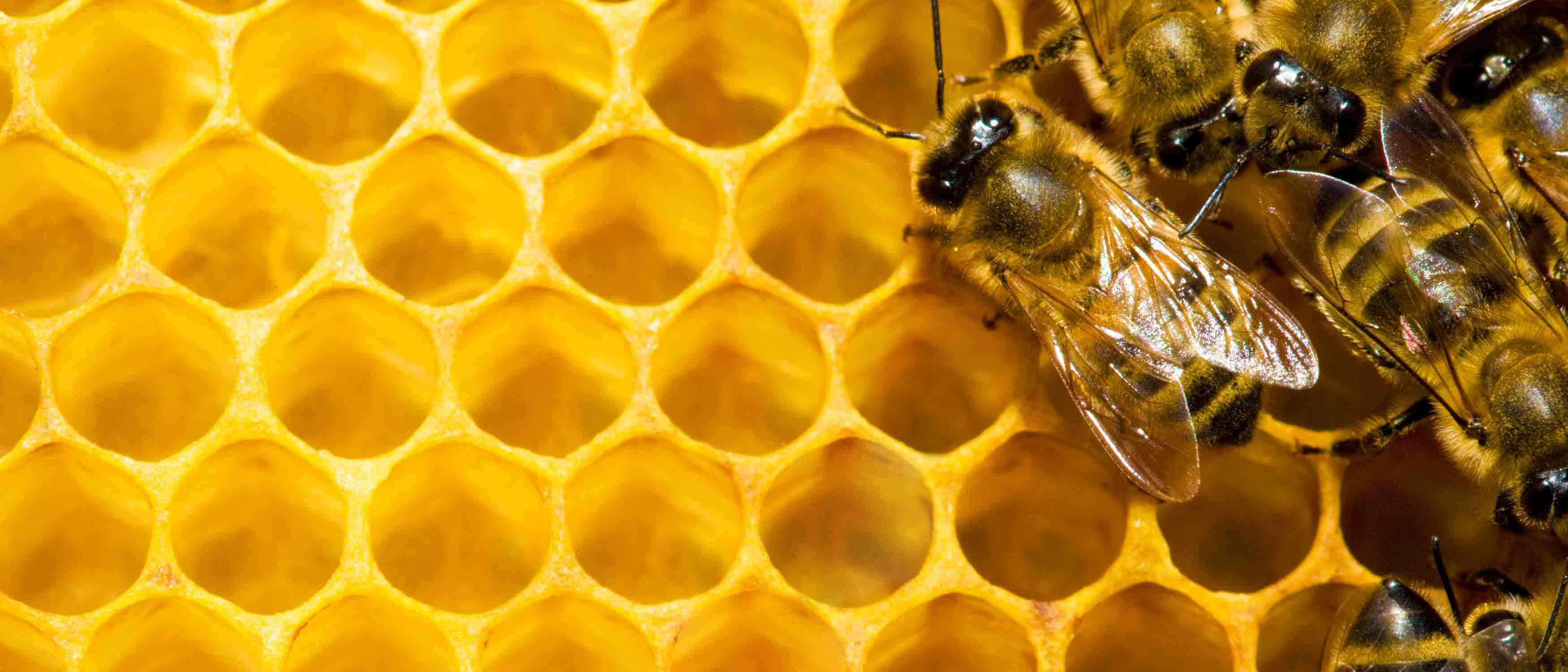 Aufwandsentschädigung für Bienensachverständige