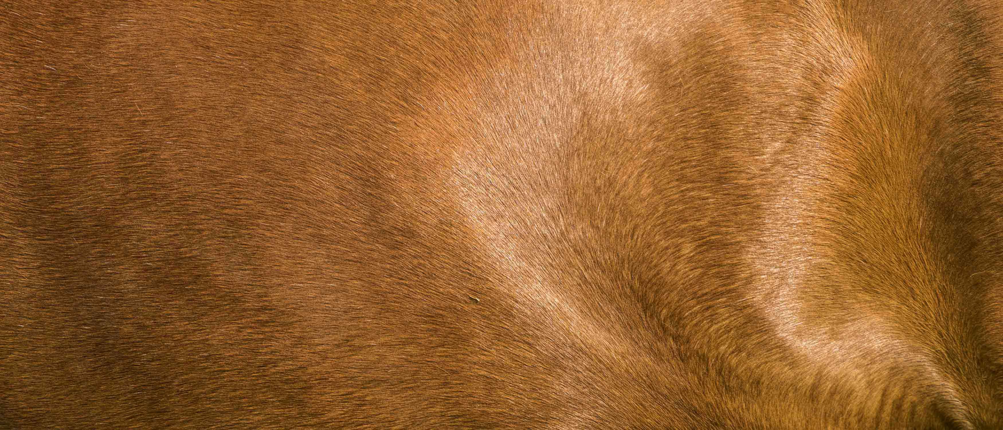 Biosicherheit in Pferdeställen – lästig, aber notwendig